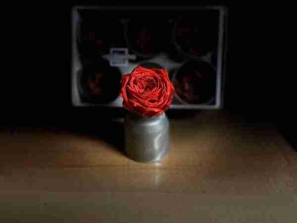 Rosa Jardín Roja