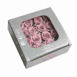 Rosa Princesa Cherry Blossom