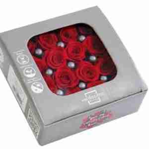 Rosa Princesa Roja
