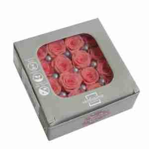 Rosa Princesa Vintage Pink