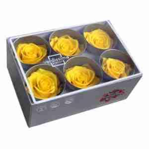 Rosa Standard Amarilla 6uds