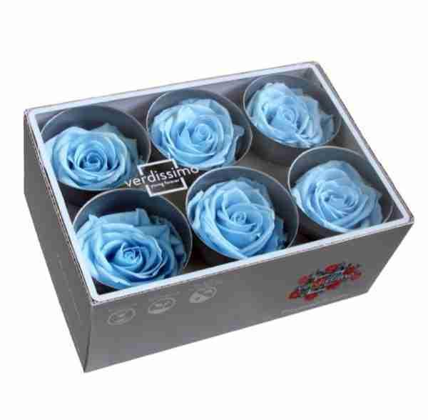 Rosa Standard Azul