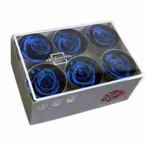 Rosa Standard Azul Oscuro