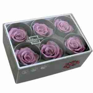 Rosa Standard Lila