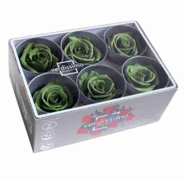 Rosa Standard Verde