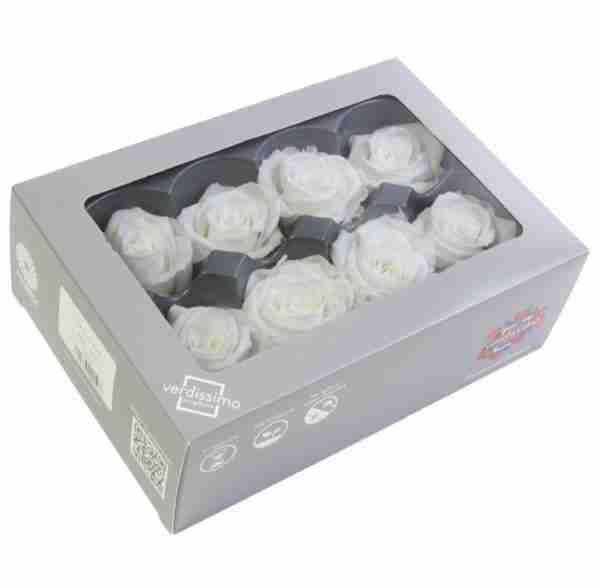 Rosa Medium Blanca