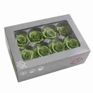 Rosa Medium Verde