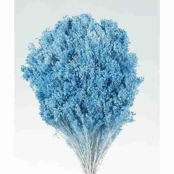 Brooms Azul Claro