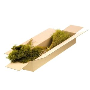 Brooms Verde