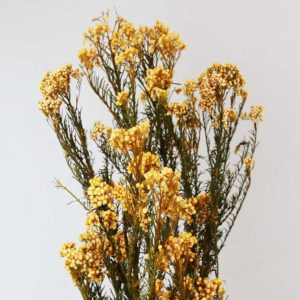 Flor de Arroz Amarilla
