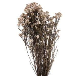 Flor de Arroz Blanca