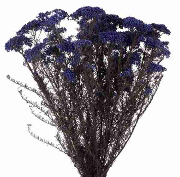 Flor de Arroz Azul