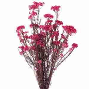 Flor de Arroz Rosa