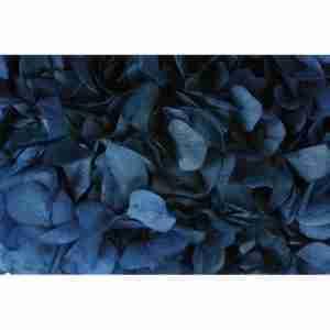 Hortensia Azul Marino