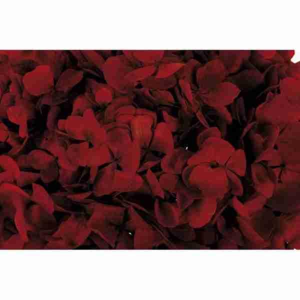 Hortensia Granate