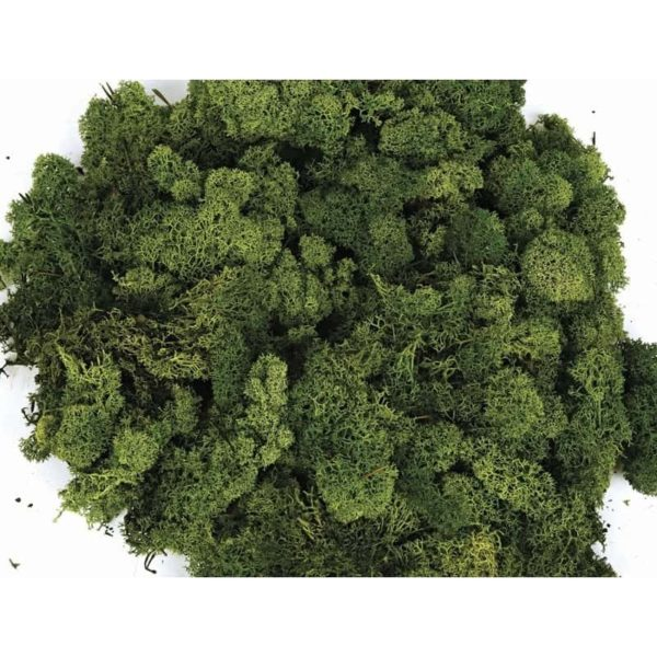 Liquen Verde