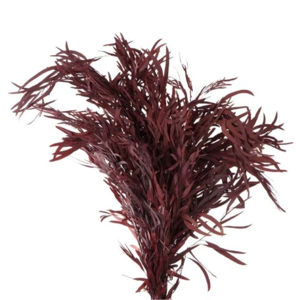 Eucalipto Nicholii Rojo