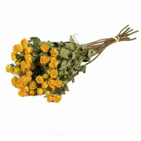 Rosa Ramificada Preservada Amarilla
