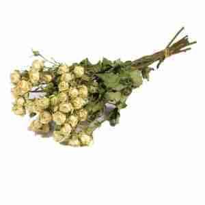 Rosa Ramificada Preservada Blanca