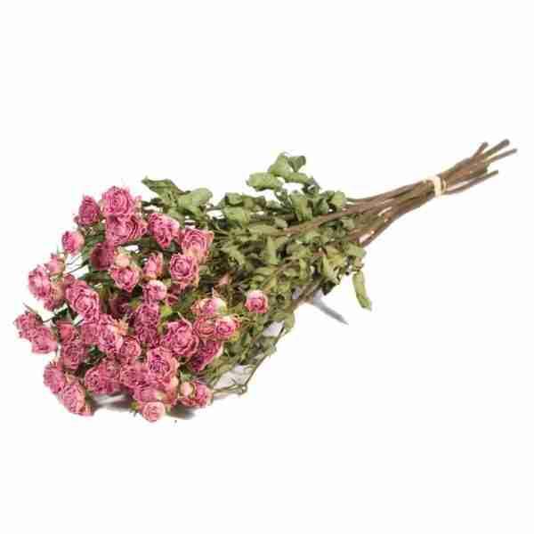Rosa Ramificada Preservada Rosa