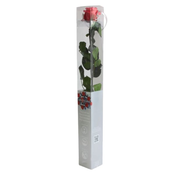 Rosa Preservada Fucsia 55cm