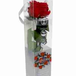 Rosa de Jardín Preservada Roja 27cm