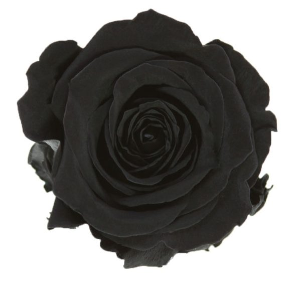 Rosa Preservada Negra 55cm