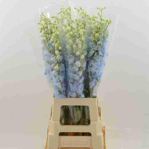 Delphinium Azul Claro