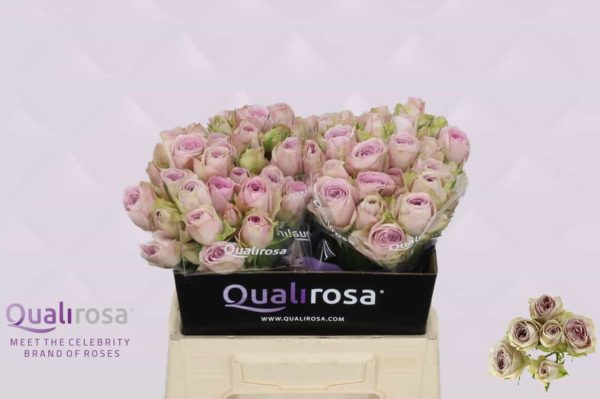 Rosa Spray Silver Lace