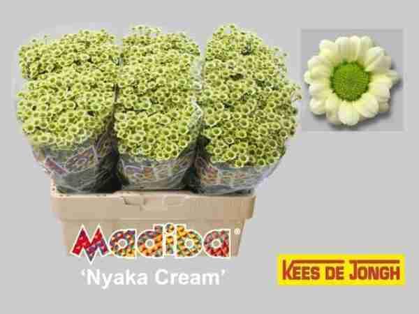 Santini Madiba Nyaka Cream