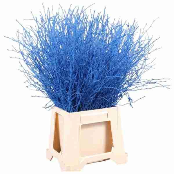 Bétula Azul