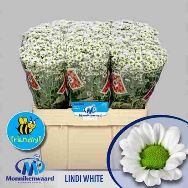 Madiba Lindi White