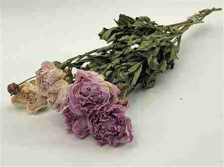 Peonía Rosa Seca