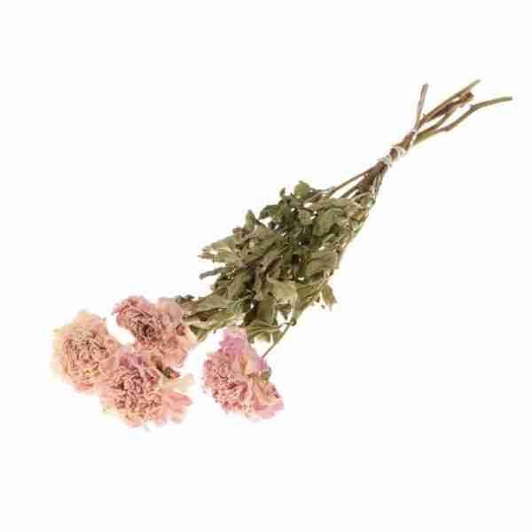 Peonía rosa claro
