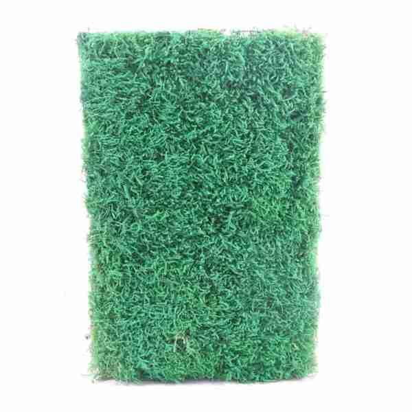 Musgo Plano Pintado Verde