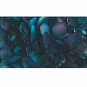 Hortensia Azul Granate