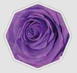 Rosa Preservada Lila 55cm
