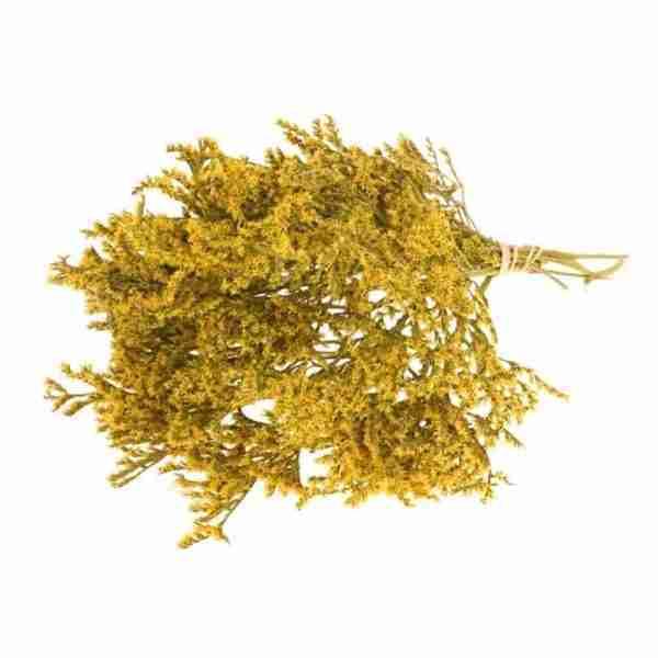 Tatarica amarilla