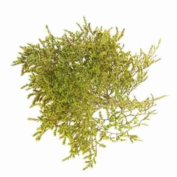 Tatarica verde