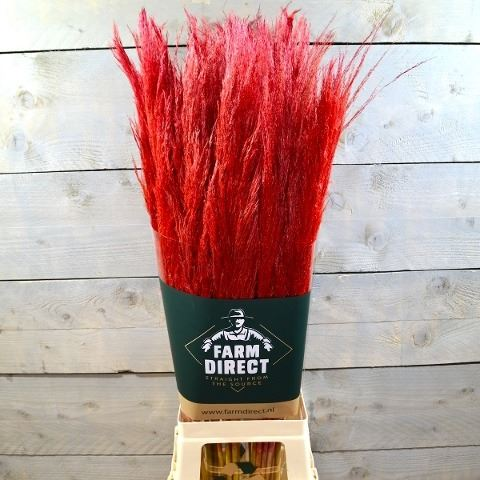 Pampa roja